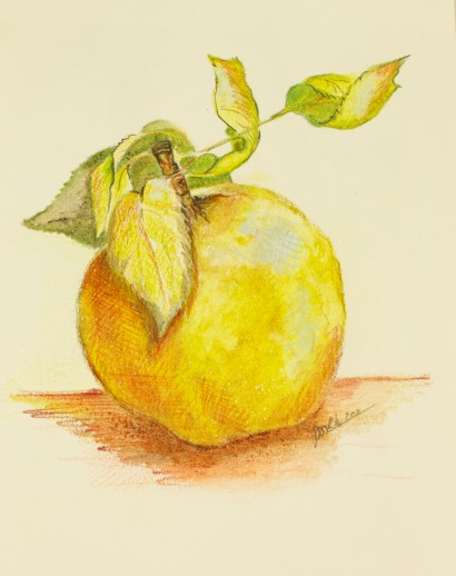 Apple, Paula Kuitenbrouwer