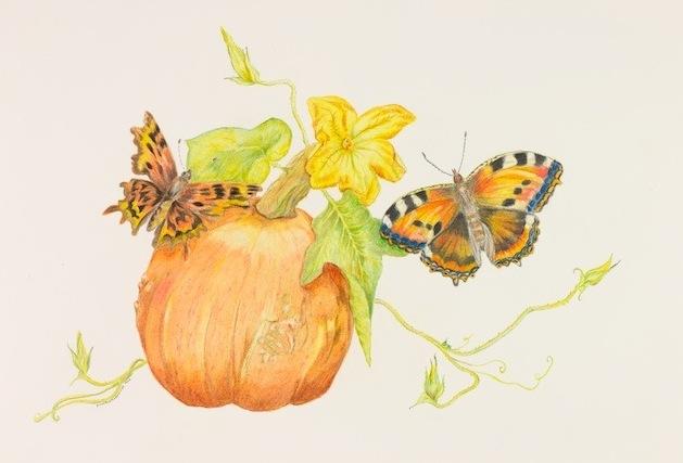 Pumpkin with Butterflies