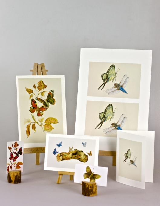 Butterfly Fine Art Cards Set