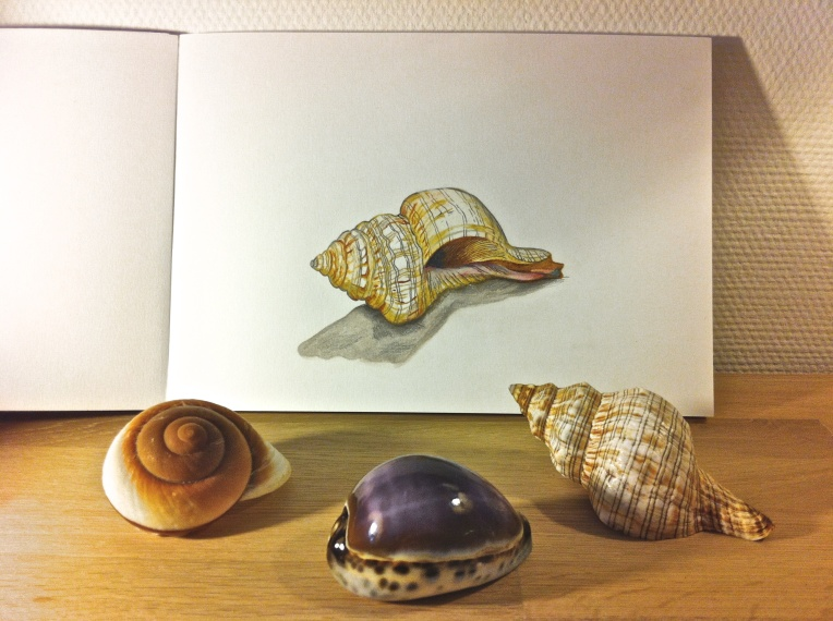 Drawing Shells
