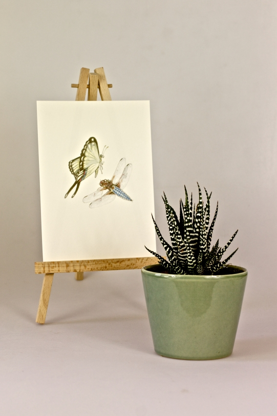 Print & Zebra Cactus