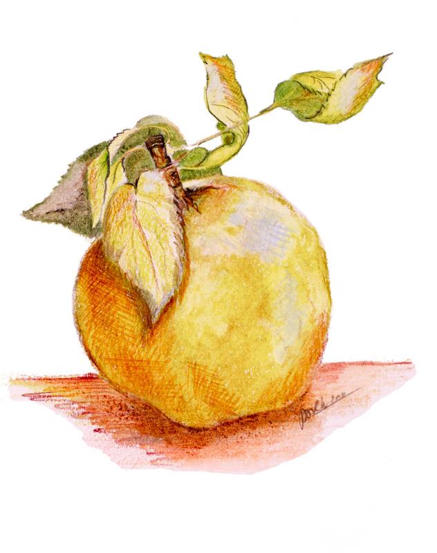 Apple by Paula Kuitenbrouwer
