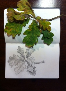 Oak leaves paula kuitenbrouwer