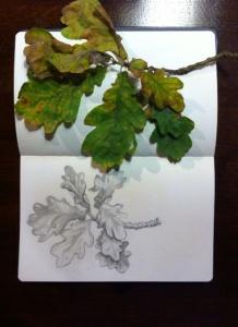 Oak leaves paula kuitenbrouwer