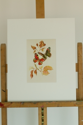 Two butterflies framed Paula Kuitenbrouwer