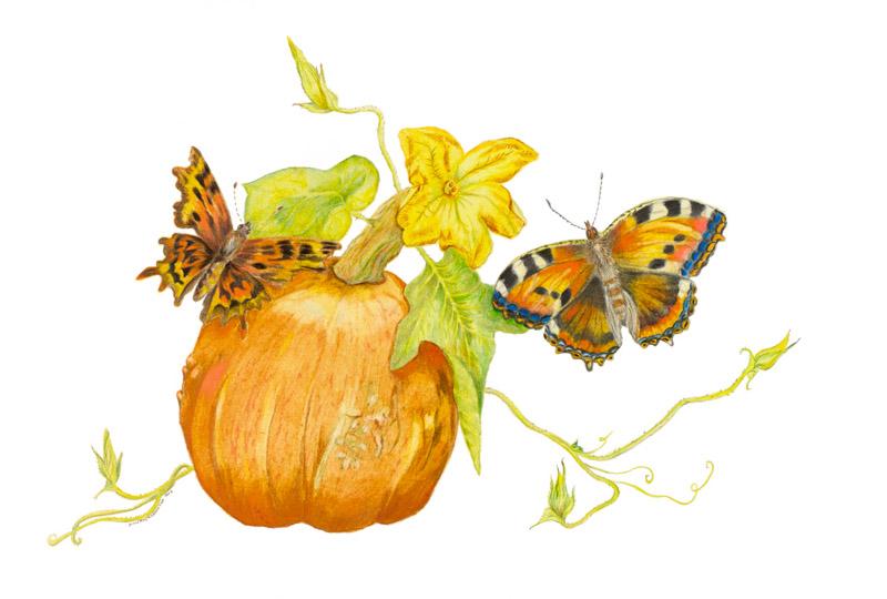 Pumkin with butterflies by Paula Kuitenbrouwer