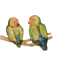 My sweet lovebirds at Etsy