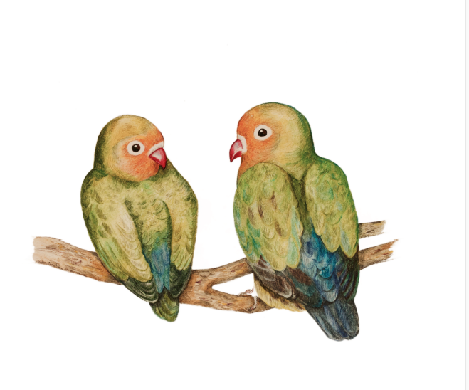 Lovebirds by Paula Kuitenbrouwer