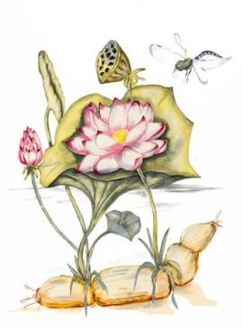 Lotus Plant