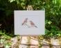 Jays in Garden