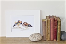 Mandarin Duck on Bookshelf