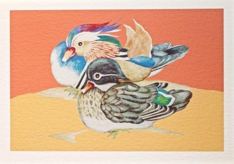 Orange Mandarin Duck Print
