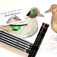 Common Teal by Paula Kuitenbrouwer