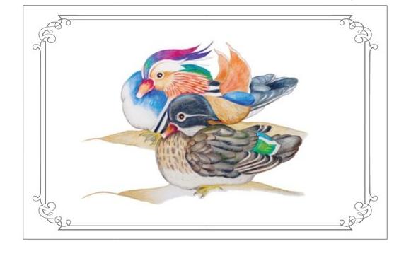 Etsy Mandarin Ducks Kader
