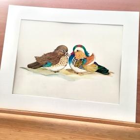 Resting Mandarin Duck by Paula Kuitenbrouwer
